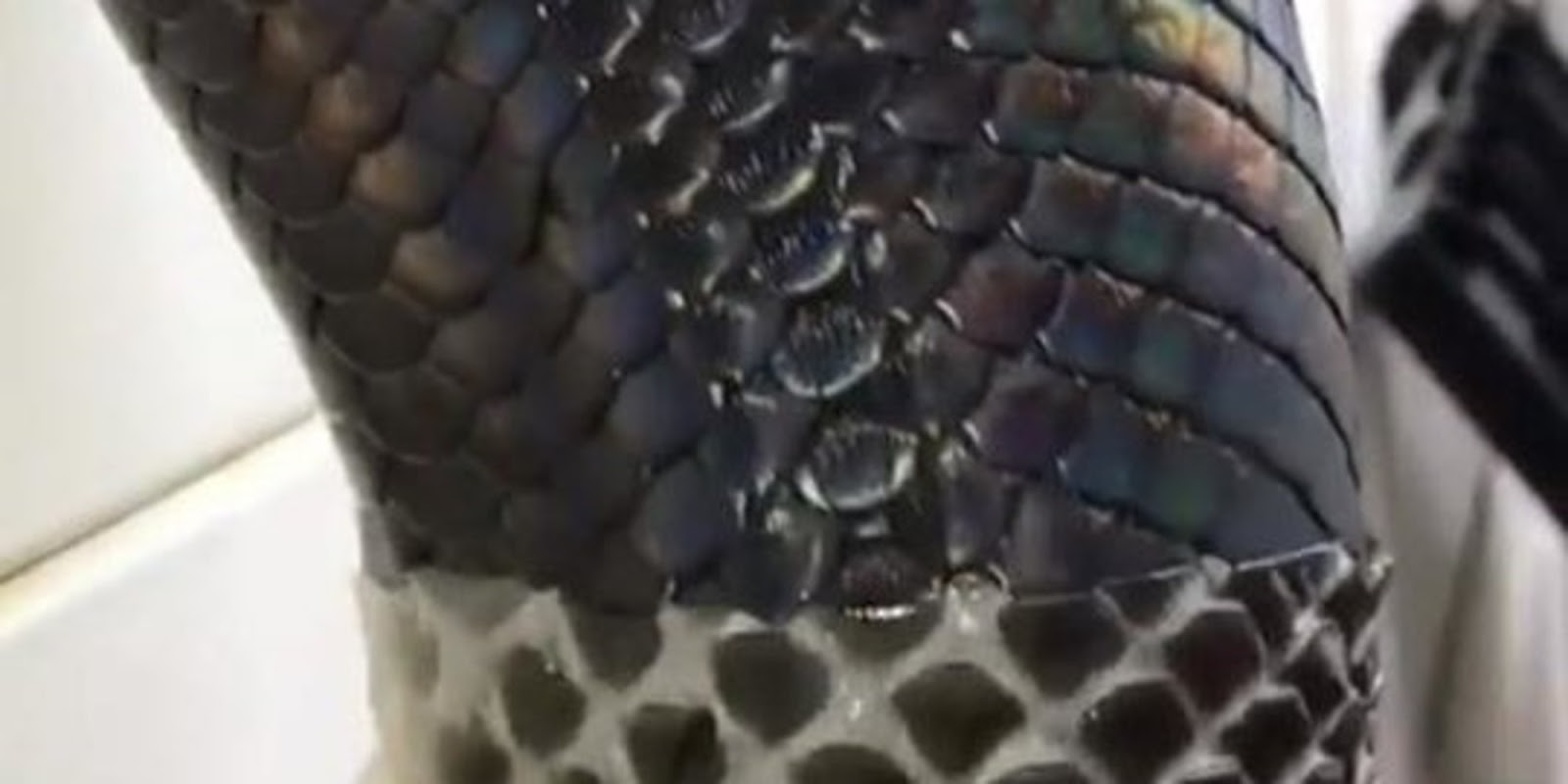 Watching This Snake Shedding Its Skin Is Creepy But Oddly Satisfying