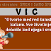 """VIC: """"Otvorio medved šumsku kafanu. Sve životinje dolazile kod njega i sve..."""""""