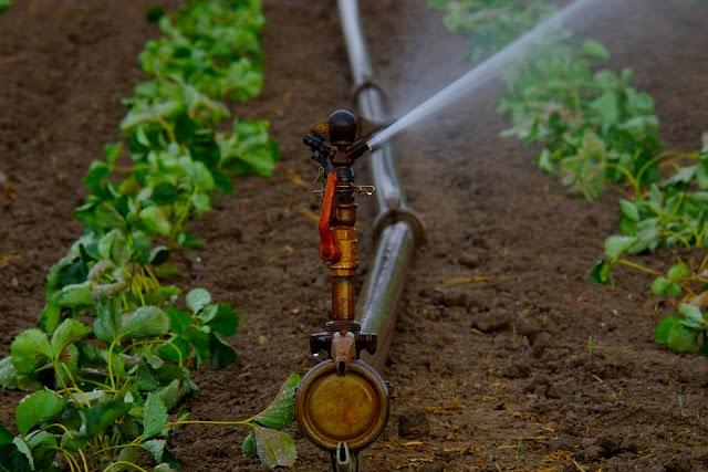 Campo irrigato artificialmente