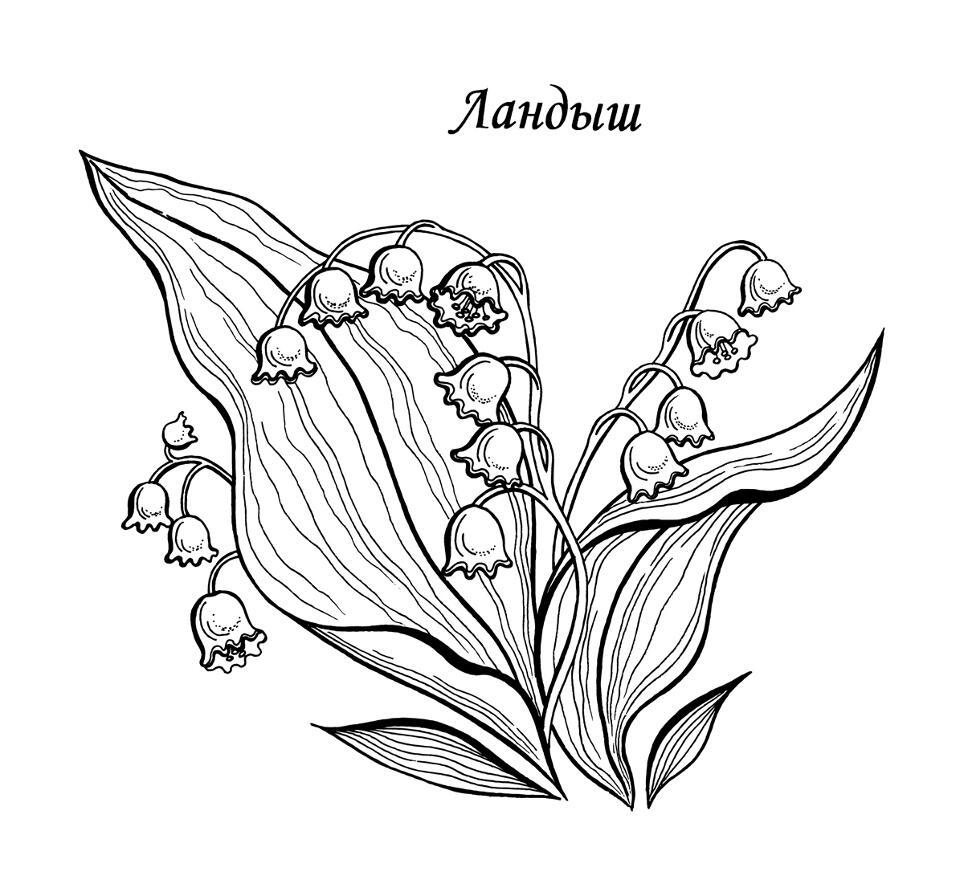 Раскраски деткам: розмальовка квіти
