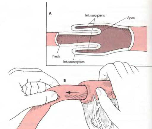 Enterotomy dan Enterectomy pada Hewan (Bedah Veteriner)