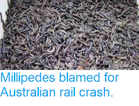 http://sciencythoughts.blogspot.co.uk/2013/09/millipedes-blamed-for-australian-rail.html