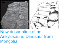 http://sciencythoughts.blogspot.co.uk/2012/02/new-description-of-ankylosaurid.html