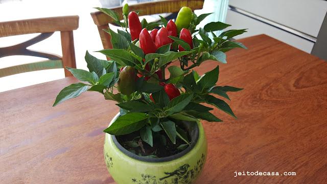 vaso-pimenta-decoração-area-gourmet