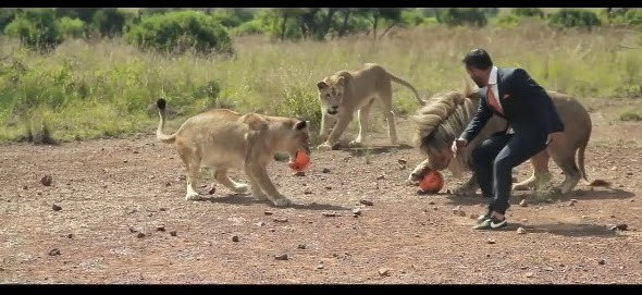 http://www.funmag.org/video-mag/mix-videos/playing-football-with-wild-lions-video/