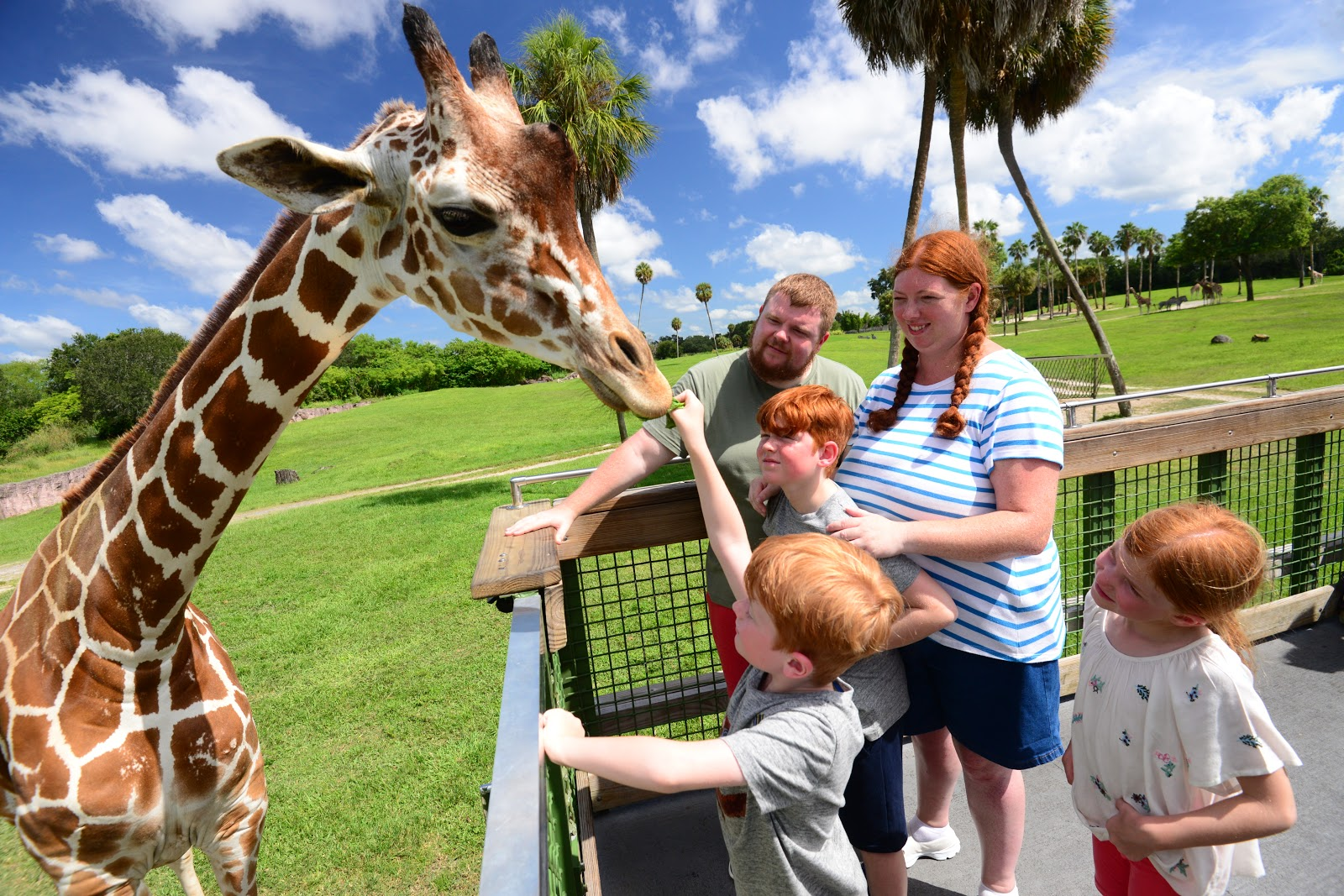 Close Up Animal Encounters And Rides To Enjoy At The