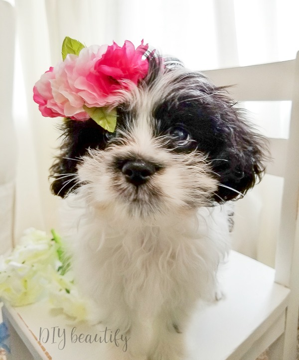 puppy wearing floral crown #dogsindecor