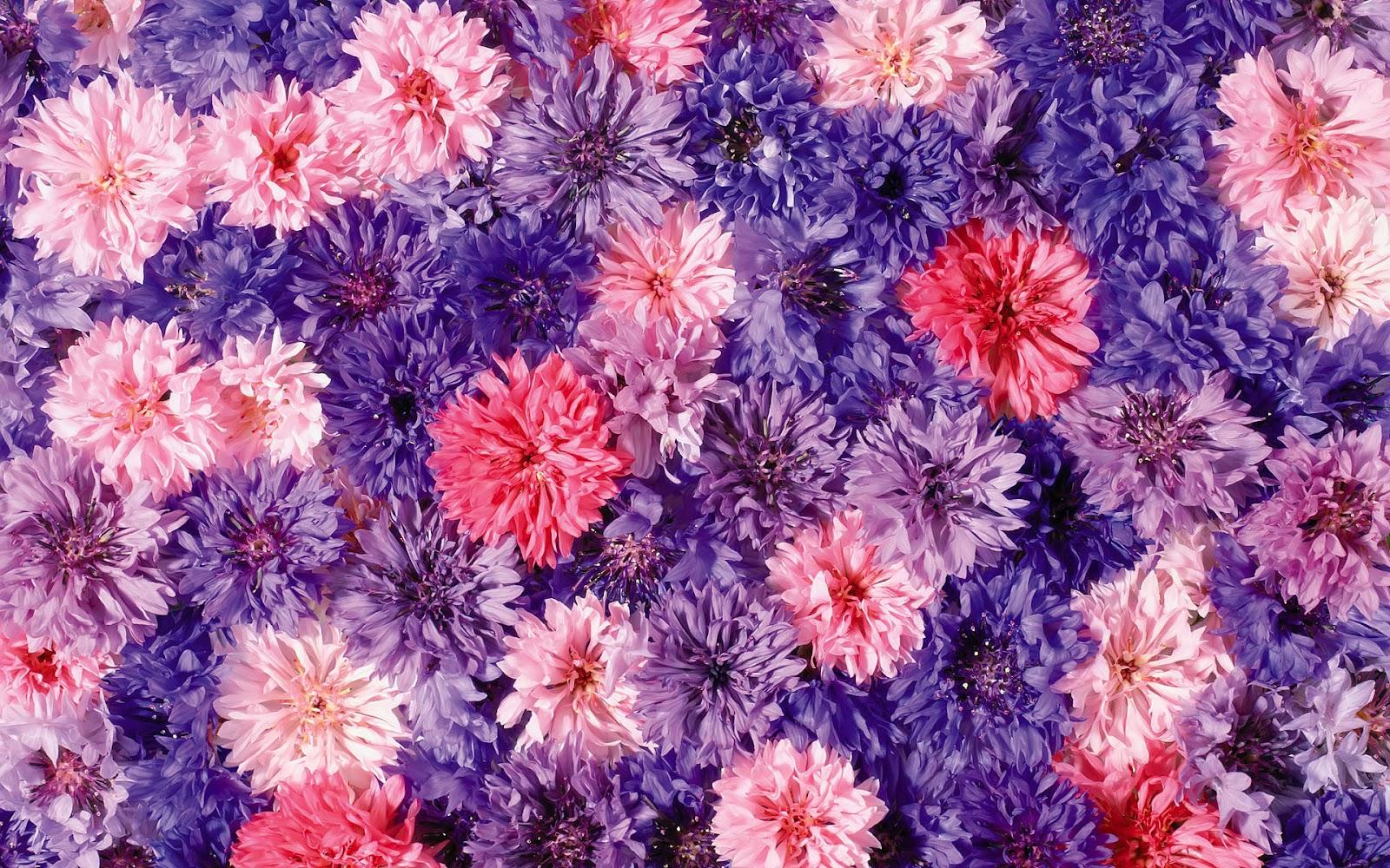 Funny Purple Flowers Hd Wallpaper: Bloemen Wallpapers