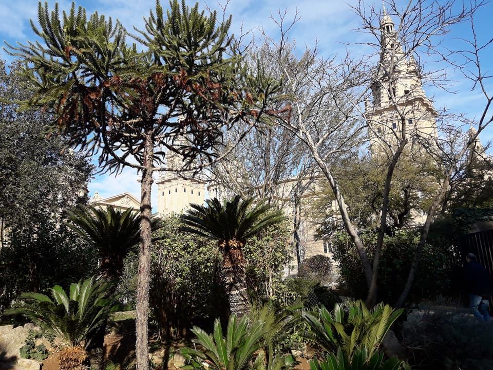 La encina solit d aria ruta al jardin bot nico de montjuic for Jardin botanico montjuic