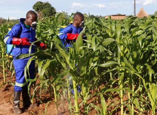 nigerians are falling sick pesticides poisoning