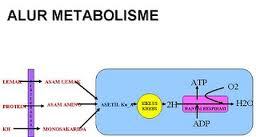 Pengertian dan Fungsi Karbohidrat, Protein, Lemak, Vitamin, Mineral dan Air