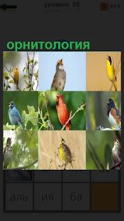 несколько видов птиц для изучения орнитология