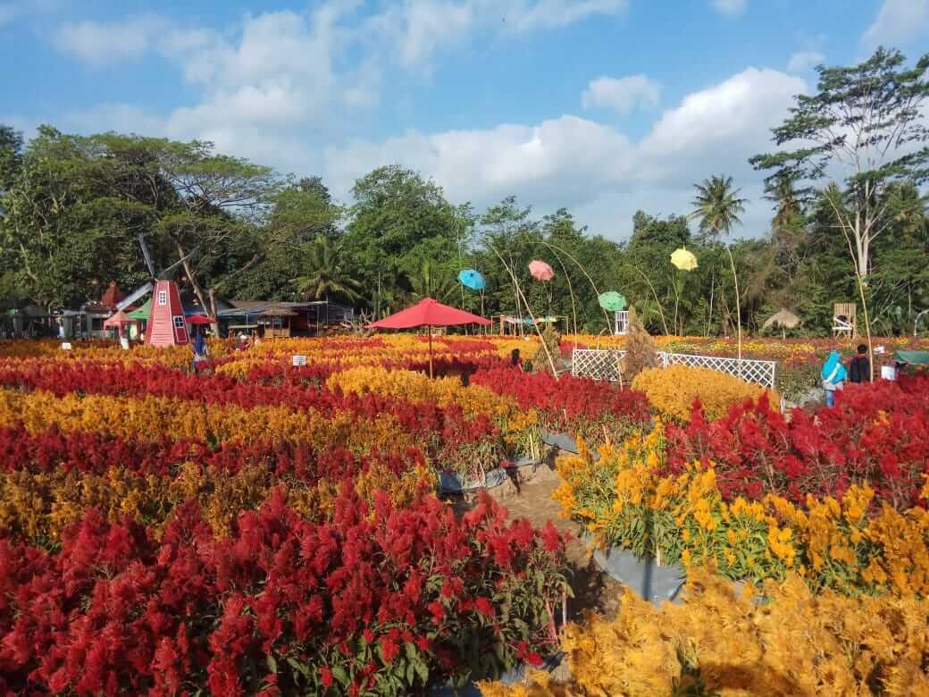 Taman bunga Ramadhanu