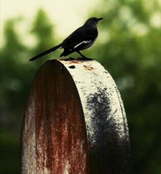 This is the picture of a bird perched on a tombstone