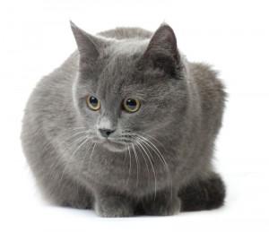 Magnificent Plexidor Pet Doors November Is Senior Cat Month Short Hairstyles For Black Women Fulllsitofus