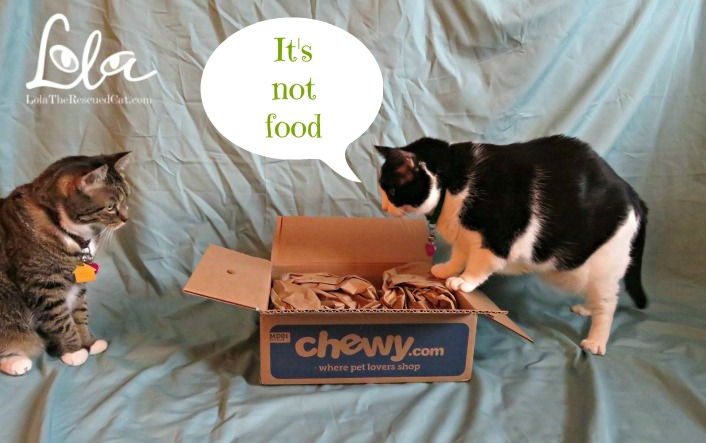 Chewy.com|Purina|Tidy Cats