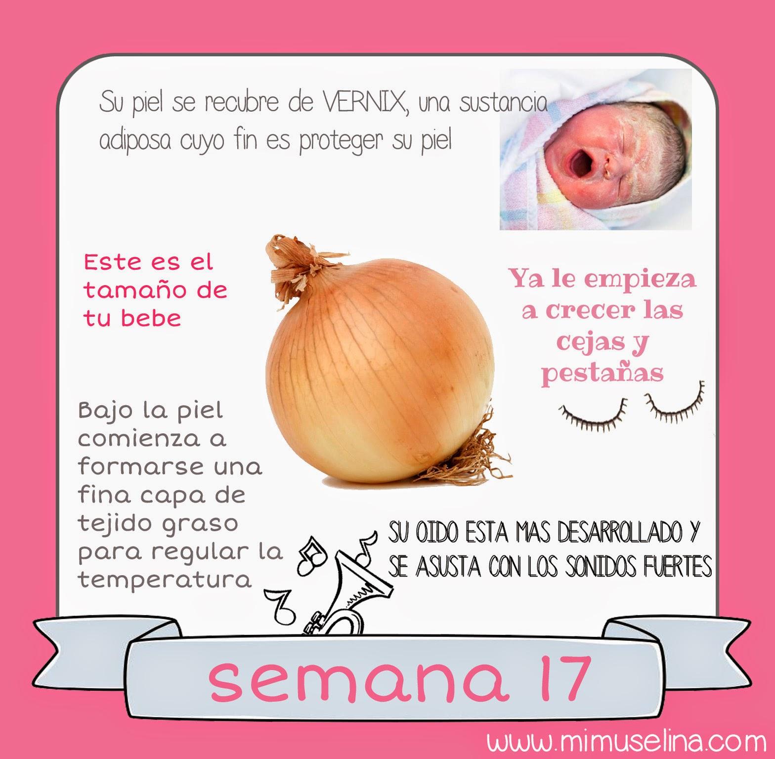 Semana 17 embarazo. Tamaño y evolución del bebé @mimuselina
