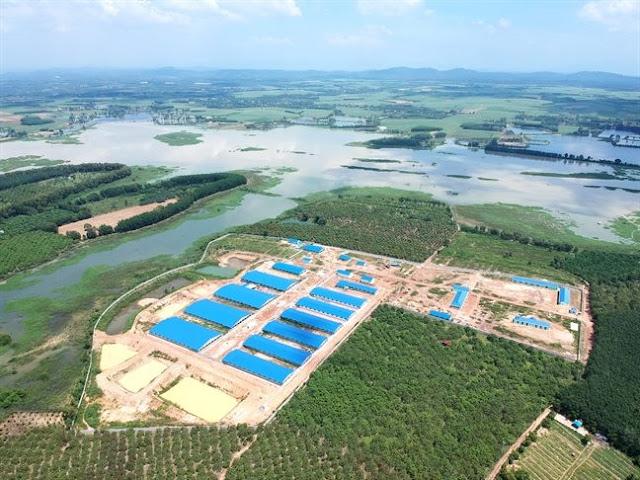 Trang trại heo khổng lồ xây dựng sát bên hồ Trị An