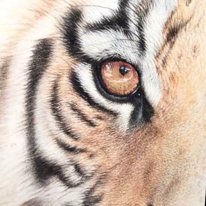 12-Tiger-Eye-Martin-Aveling-Animal-Portraits-www-designstack-co