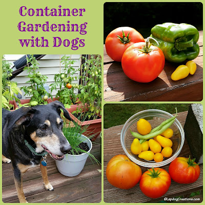 Container Gardeing with Dogs