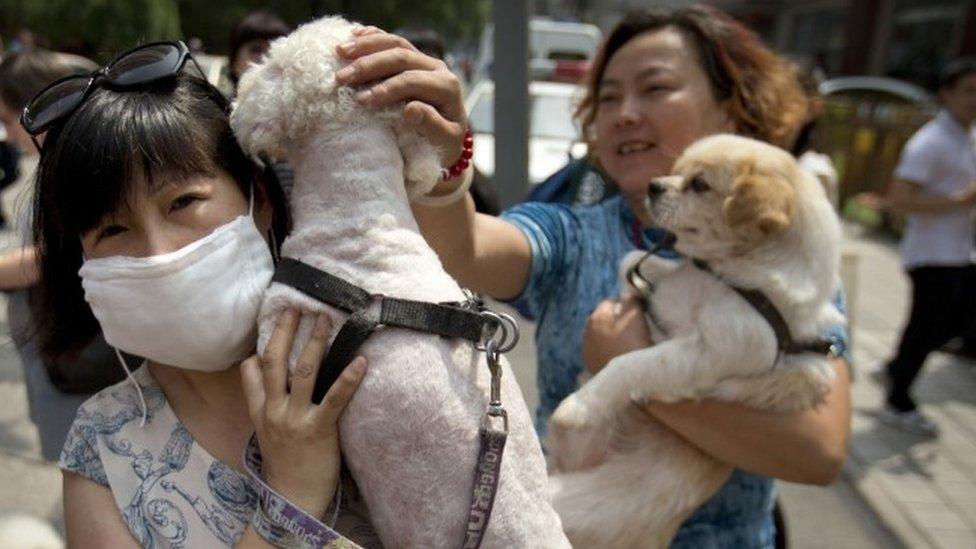 Ativistas manifestam-se contra o Festival de Yulin, com os seus cães