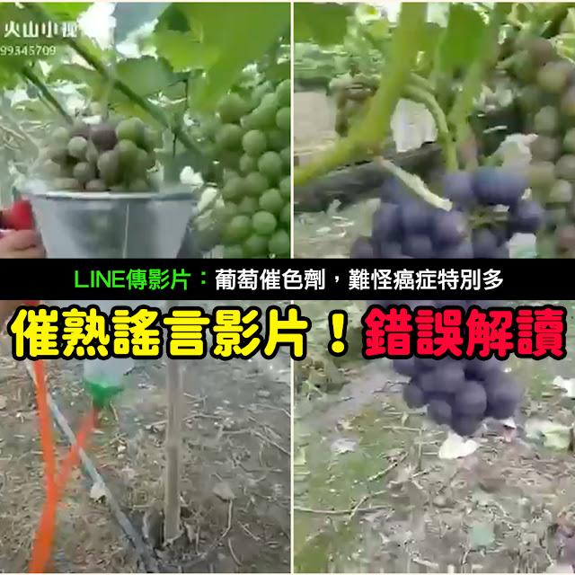 葡萄催色劑 癌症 謠言 影片 催熟