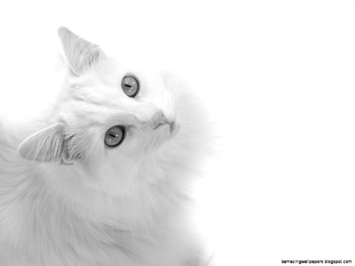 white cat tumblr amazing wallpapers