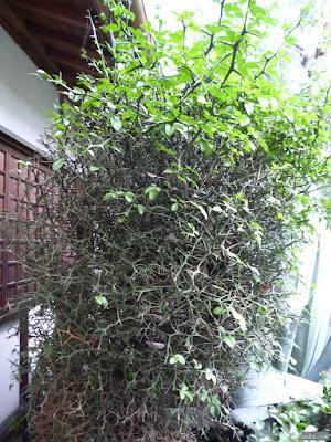 棘のある植物