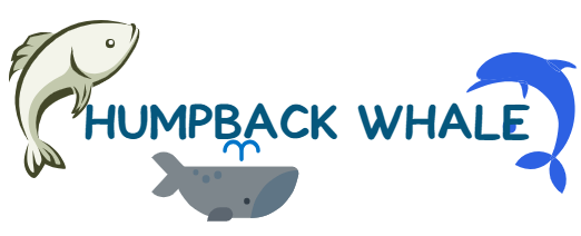 About Humpback Whale Facts And Migration