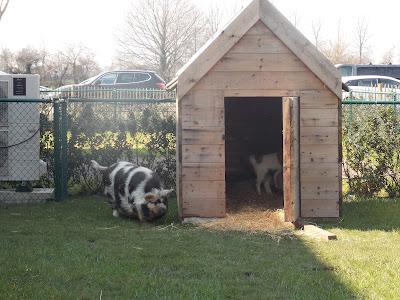 Blauwe Hoeve Zwijndrecht: kinderboerderij, binnen- en buitenspeeltuin, brasserie en B&B