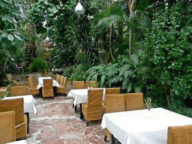 zielonogórska, palmiarnia, restauracja, tropiki