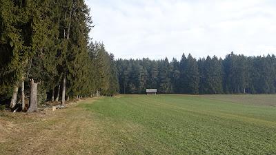 Einsamer Weg am Waldrand