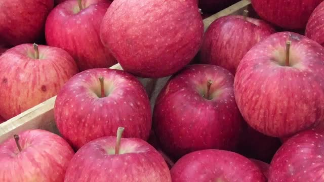 12 MOST EXPENSIVE FRUITS IN THE WORLD Sekai-ichi Apple