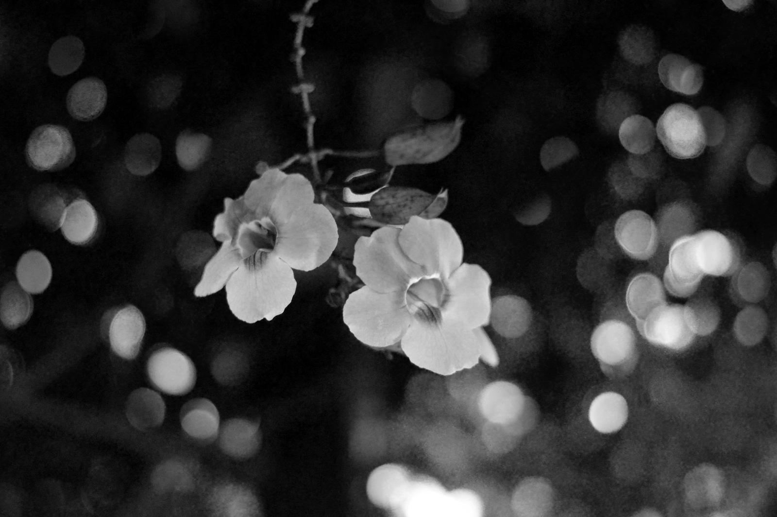 Dossiê de Verão: Bianca Fotografia - Preto e Branco