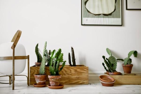 Interior decorating with cactus plants!
