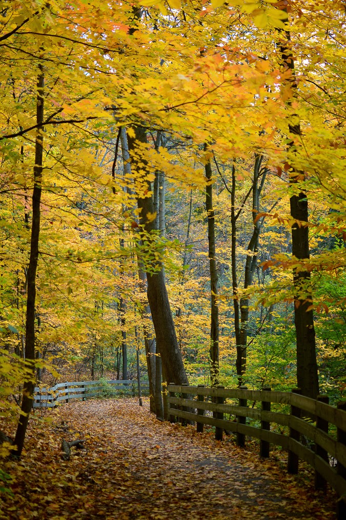 Fall scenery in Ontario, Canada #photography