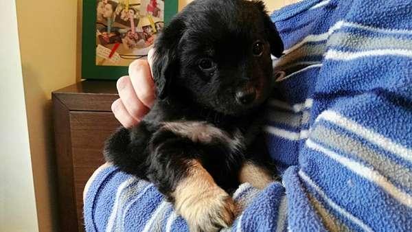 cachorro tamaño pequeño 3