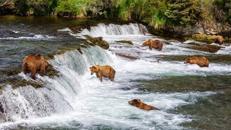 Setelah satu abad, beruang terlihat lagi di Chernobyl