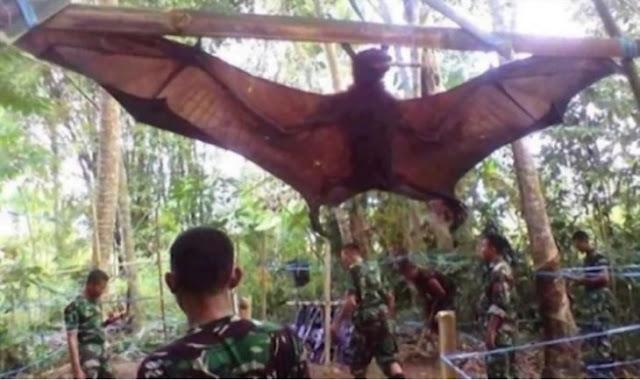 Militares encuentran murciélago gigante en Filipinas