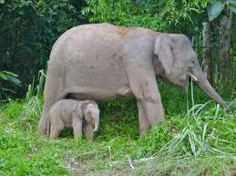 Name of female elephant