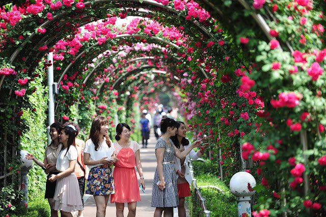 Hanoi to host first Bulgarian rose festival in Vietnam (in March next)