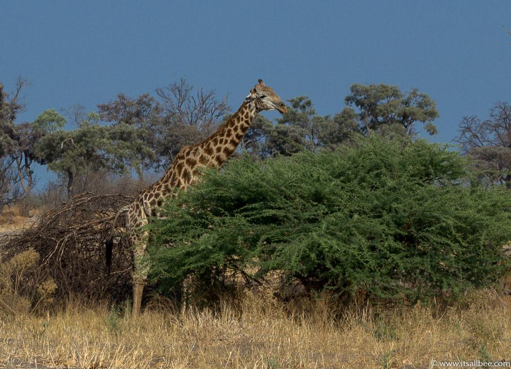 Visions of Wild In Africa's Botswana | Okavango Delta Safari