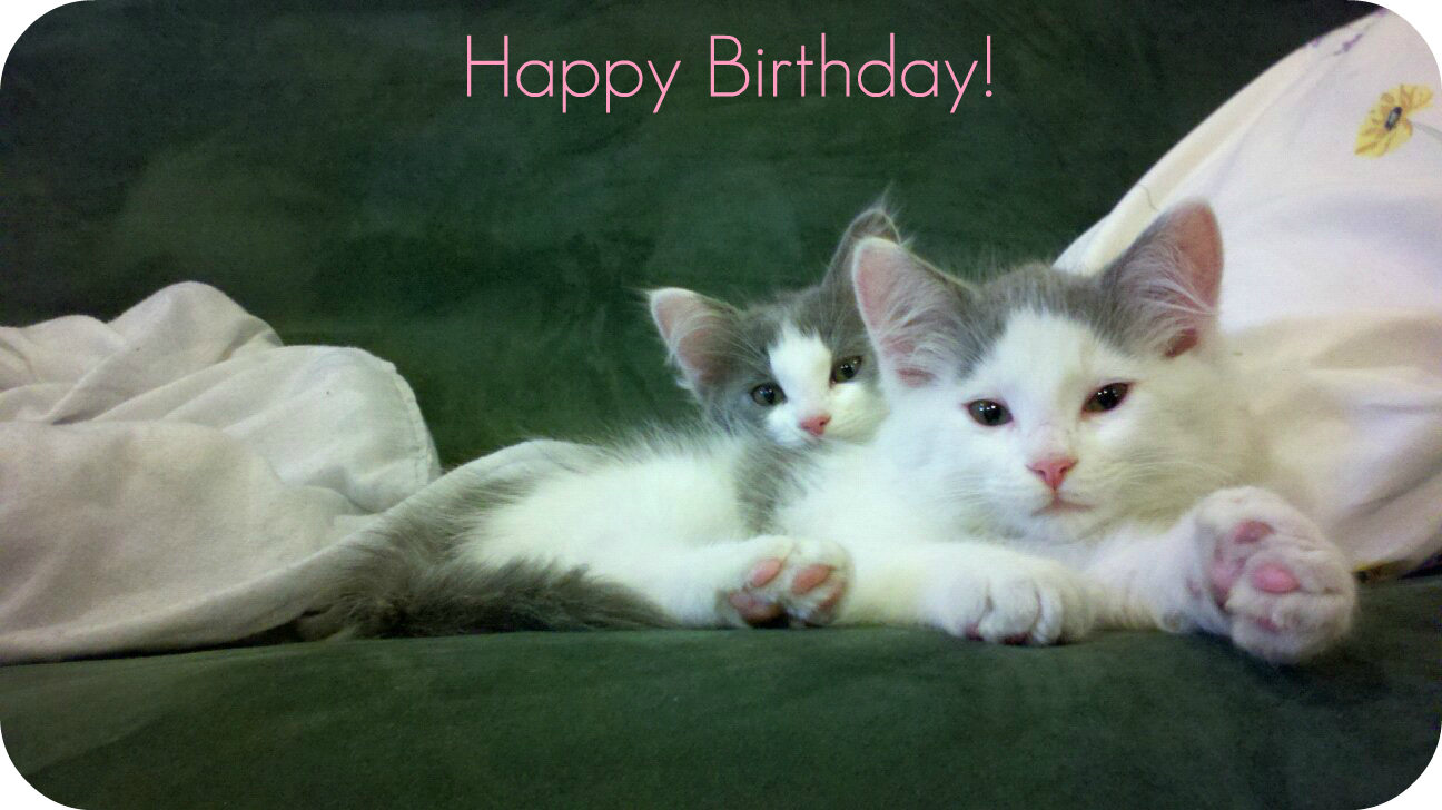 Happy Birthday Kittens Posted On Tuesday February 28 2012