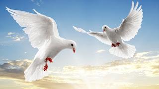 كتابة موضوع تعبير عن السلام وسلبيات الحروب على المجتمع