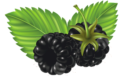 gambar clipart buah blackberry