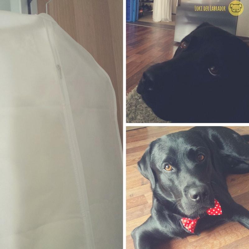 Fotocollage Hochzeitskleid Labrador
