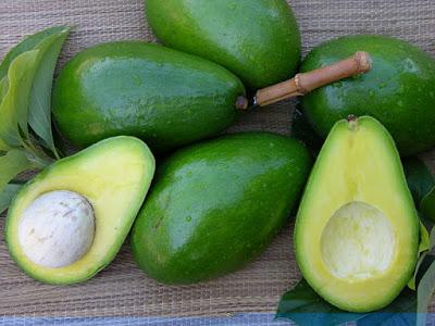 gambar buah apokat wisataarea.com