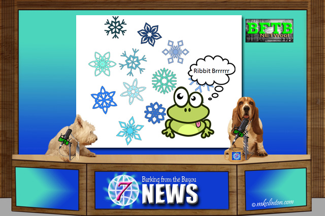BFTB NETWoof News with frozen Wood Frog story