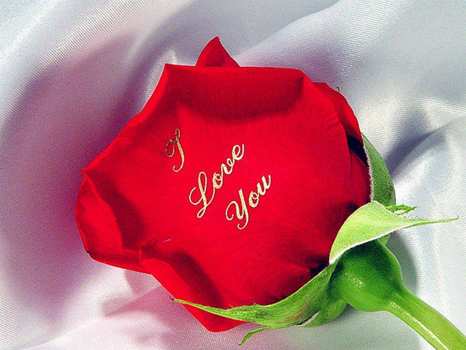Картинки цветы с надписью люблю тебя, картинки футболках