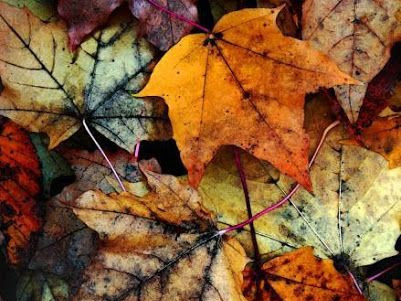 AUTUMN TAG: WHY I LOVE AUTUMN